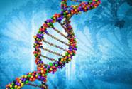 """长期被误解 非编码RNA存在""""认知黑洞"""""""