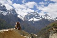 西藏:加查县的野猴乐园