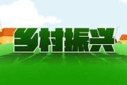 蓟州区发展林果产业振兴乡村:小柿子做出大文章