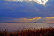 芦苇青青 鸟鸣啾啾——长江入海口湿地保护见闻