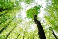 提升环境治理水平的方法路径