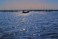 石臼湖:水草丰美白鹭归