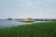"""内蒙古""""一湖两海""""生物多样性持续增加"""
