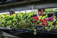 遼寧這個脫貧任務最重的地方靠什么拔窮根