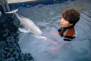 越看越爱:洞庭渔民的江豚情缘