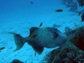 绝迹十多年的本土鱼重返渤海湾