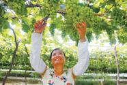 """安徽庐江""""三园""""联动促进农业增效"""