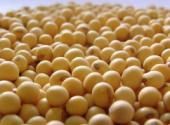 环球时报:购买美农产品是善意符号,也是杠杆