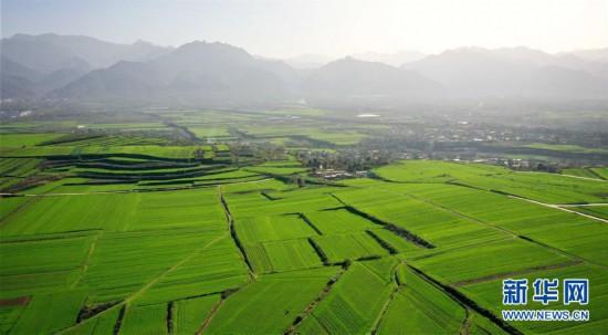 (美丽中国)(3)陕西长安:冬日小麦铺绿毯