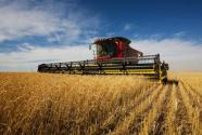 2020年,农业农村五大关键点