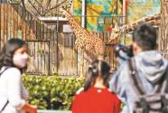 时隔58天北京动物园开园
