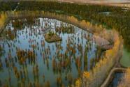 """""""人、水、林、鸟""""共生的""""美丽画卷""""——跨皖苏两省池杉湖湿地公园采访见闻"""