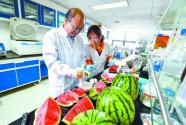专家找到西瓜变甜关键基因