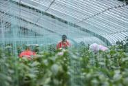 西吉将台堡镇:大力发展现代农业 科技之力改变乡村面貌