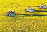 """今秋丰收犹三思——写在庆祝第三个""""中国农民丰收节""""之际"""
