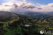 广西西林:茶产业托起少数民族脱贫致富梦