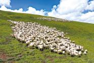 厚植青海農牧業綠色生態發展優勢