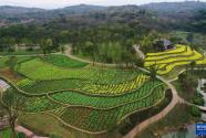 一座島就這樣回歸自然——長江上游最大江心島的生態變奏