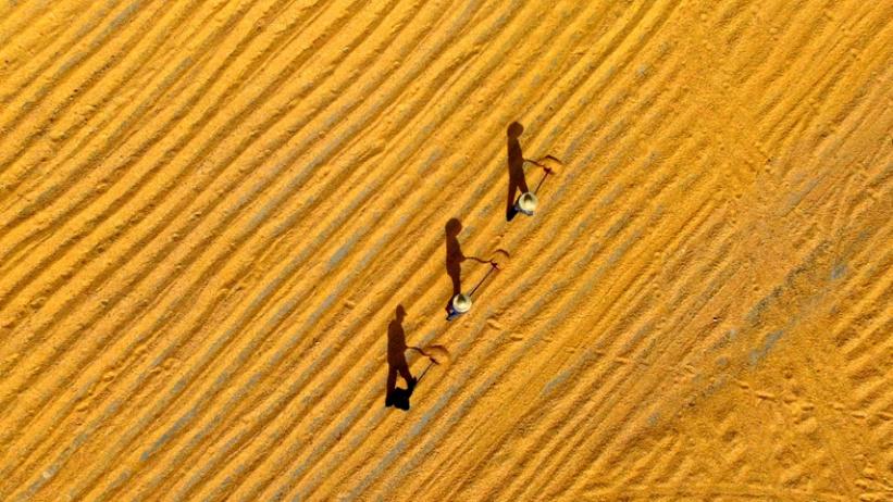 喜看稻菽千重浪——写在秋粮丰收成定局之际